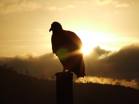 Крайне редкую птичку впервый раз заметили наБайкале