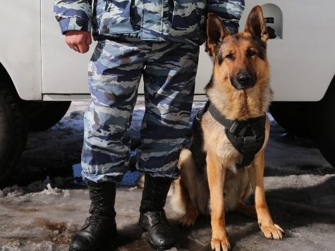 ВБоханском районе собачка Чак помогла установить подозреваемого вподжоге дома