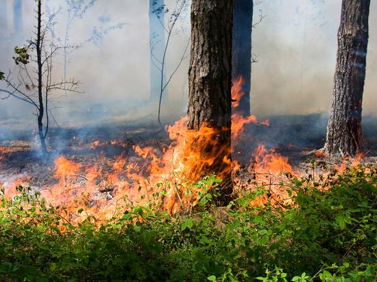 Неменее 140 млн руб. выделят пострадавшим отпожаров вСибири