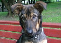 Хозяин забитого дворником щенка рассказал, кто приказал избавиться от собаки