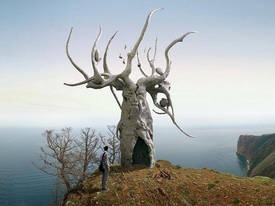 Жители Ольхона против железного дерева