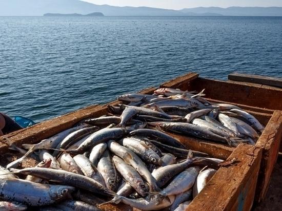 В Российской Федерации запретили ловить омуля наБайкале