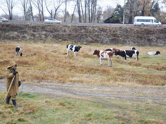Офисные работники Иркутска обзаводятся собственными стадами