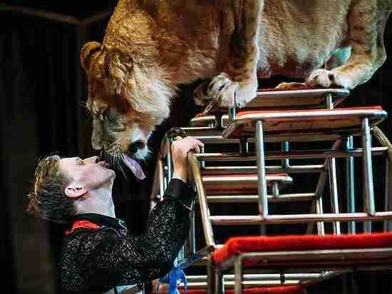Девять львиц и настоящий мужчина