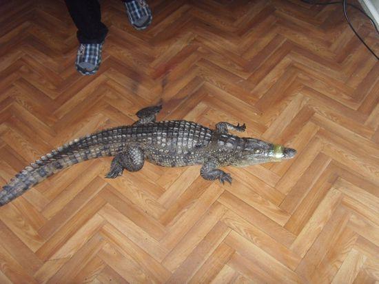 сергей фальков крокодил тузик иркутск
